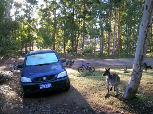 fahrner-kangaroo-australien-1.jpg.